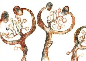 "Fungi.   Watercolor on Paper, 2011 4"" x 5"" Donated to Art 4 Shelter Simpson Housing Benefit"